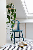 Devil's ivy in hanging basket above blue spoke-back chair