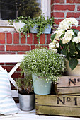 Plants in metal buckets arranged decoratively on numbered wooden crates
