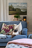Patterned pillows and a cat on a blue upholstered sofa in a living room