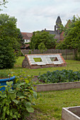 Vegetable beds with surrounds made from boards and cold frame made from old windows in country garden
