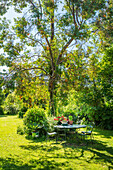 Table with chairs under tree in garden