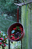 Wreath of holly berries and deer figurine in old colander