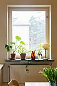 Zimmerpflanzen auf der Fensterbank