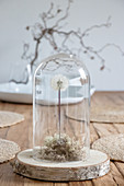 A dandelion with moss on a wooden disc under glass cloche
