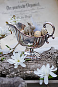 Easter eggs and bunny in silver sauce boat, magnolia and serviceberry flowers