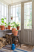 Terracotta plant pots on windowsill and on stool in conservatory