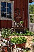 Vegetable garden with wood chip paths outside wooden house