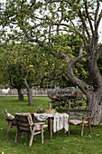 Rustic table and chairs under old apple tree in garden