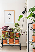 Many houseplants on plant stand, above picture