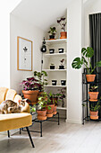 Many houseplants and cuttings on plant stand and on shelf, armchair with cat in foreground