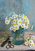 Posy of chamomile
