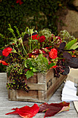 Dahlias and elderberries in wooden crate