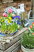 Alte Emailleschüssel mit Traubenhyazinthen, Tulpen, Narzissen, Netziris und Primel
