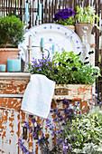 Terrasse mit Deko im Shabby-Look, bepflanzte Schublade mit Hornveilchen und Polsterglockenblume