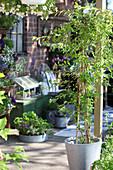 Plants in zinc pots