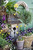 Frühlings-Arrangement mit Hornveilchen, Narzissen, Traubenhyazinthen, Hyazinthen und Rosmarin-Stämmchen