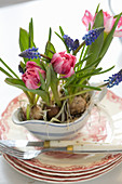 Tulips and grape hyacinths planted in sauce boat decorating table