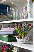 Spring in the kitchen with tulips, grape hyacinths and reticulated iris