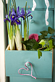 Reticulated iris and ivy planted in open drawer decorated with small heart and ranunculus flower