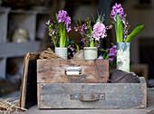Sträuße aus Hyazinthen, Waxflower und Ginster an Schubladen mit Schnur-Knäueln