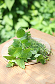 Fresh lemon balm and chamomile on wooden table
