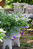 Petunias, verbena, graceful spurge and structural plants planted in zinc tub
