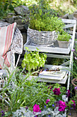 Herbs on plant stand: basil, thyme and sage