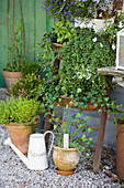 Vertical planter: wicker baskets on ladder, potted herbs on gravel floor