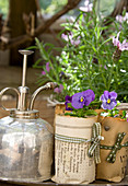 Violas in handmade paper plant pots