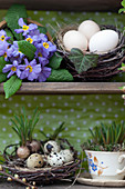 Primeln, verschiedene Eier in Vogelnestern und bepflanzte Tasse