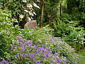 A cozy seat between cranesbills, clematis, bleeding hearts and ferns