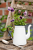 Enamel coffee pot planted with violas