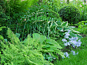 Shade bed with forest phlox 'Clouds of Perfume', Funkie 'Francee' 'Royal Standard', Solomon's seal 'Weihenstephan', fern and box ball