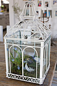 Arrangement of moss, feathers and grape hyacinths in ornate lantern