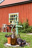 Hand pump, brown demijohn and deep purple heucheras outside red house