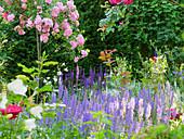 Roses ('Super Fairy') and woodland sage ('Blauhügel', 'Caradonna', 'Light Pink') in garden