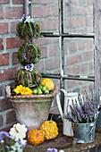 Kugelbäumchen aus Moos und Knospenheide als Herbstdekoration