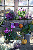 Autumn arrangement with ornamental cabbage, peat myrtle, aster, and budding heather in a wooden box, cyclamen, and ivy