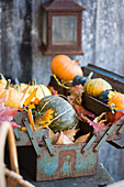 Pumpkins and ornamental squash with autumn leaves in an old toolbox