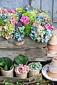 Colour mix of hydrangea blossoms, ornamental cabbage and hebe in wooden box