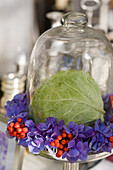 Glass bell jar with savoy leaf and wreath of hydrangea blossoms and rowan berries