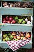 Harvest in drawers: Garlic, onions, Brussels sprouts and green apples