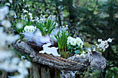 Grape hyacinths and horned violets with feathers and Easter bunny in bark