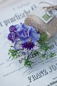 Blau-violette Blüten von Drehfrucht mit Zwerg-Schleierkraut in Garnrolle