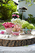 Frühlingsdekoration mit Hortensienblüten und gefüllter Tulpe in Muffinförmchen