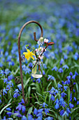 Posy of narcissus, grape hyacinths and flowering twigs in tiny bottle hung from decorative crook in carpet of spring squills
