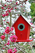 Nesting box hung in decorative peach tree 'Melred'
