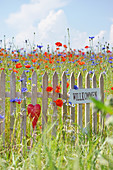 Small fence with welcome sign and red heart in a flower meadow with poppies, cornflowers and chamomiles
