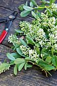Freshly cut privet flowers