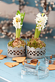 Hyacinths, gingerbread, and heart-shaped cookie cutters
